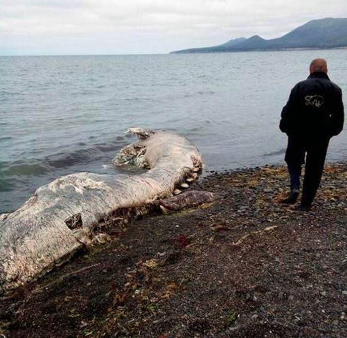 Mysterious-sea-creature-in-Russia-5