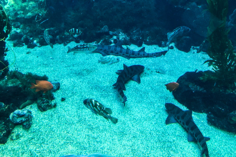 Sharks-Fish-on-Ocean-Floor
